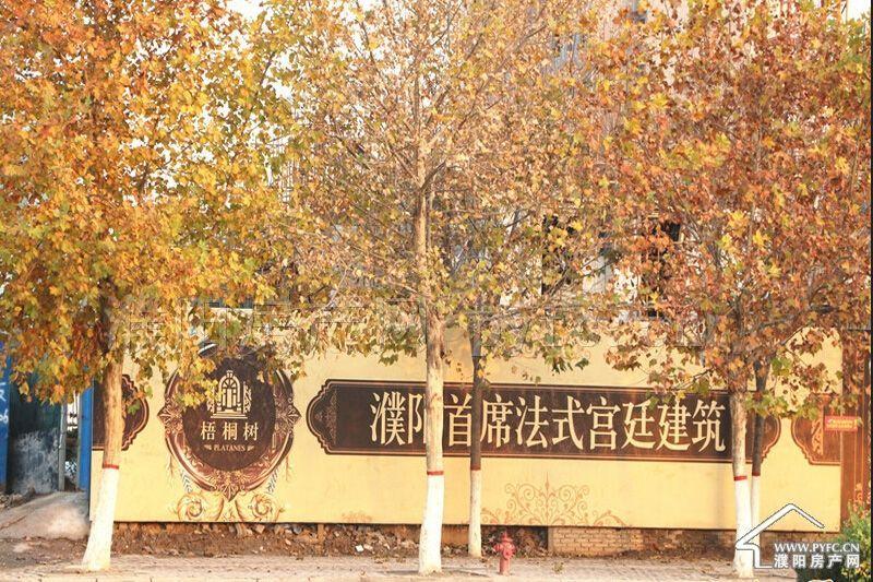 楼盘相册-梧桐树-邯郸市博地房地产开发有限公司